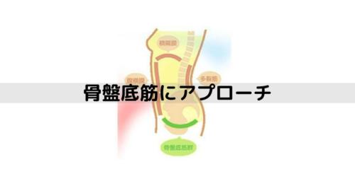 骨盤底筋の図解